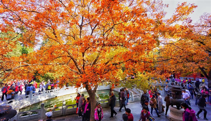 Resultado de imagem para outono em beijing