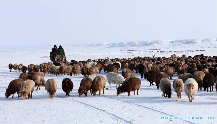 Altay xinjiang