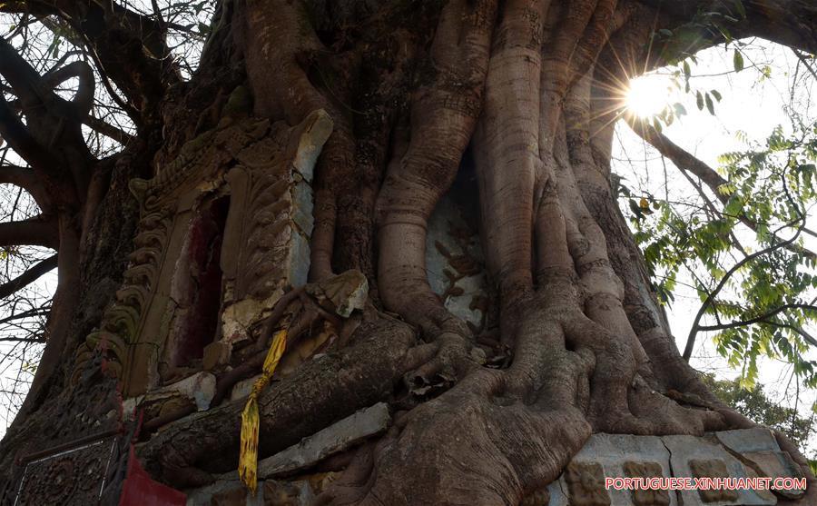 CHINA-YUNNAN-BANYAN TREE-PAGODA (CN)