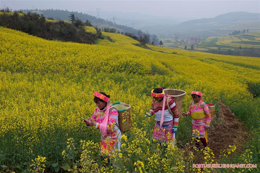 CHINA-YUNNAN-RAPE FLOWER BLOSSOMING (CN)