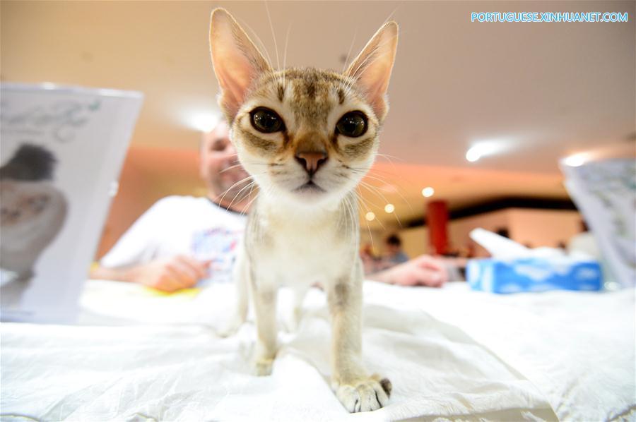 CROATIA-ZAGREB-INTERNATIONAL CAT SHOW