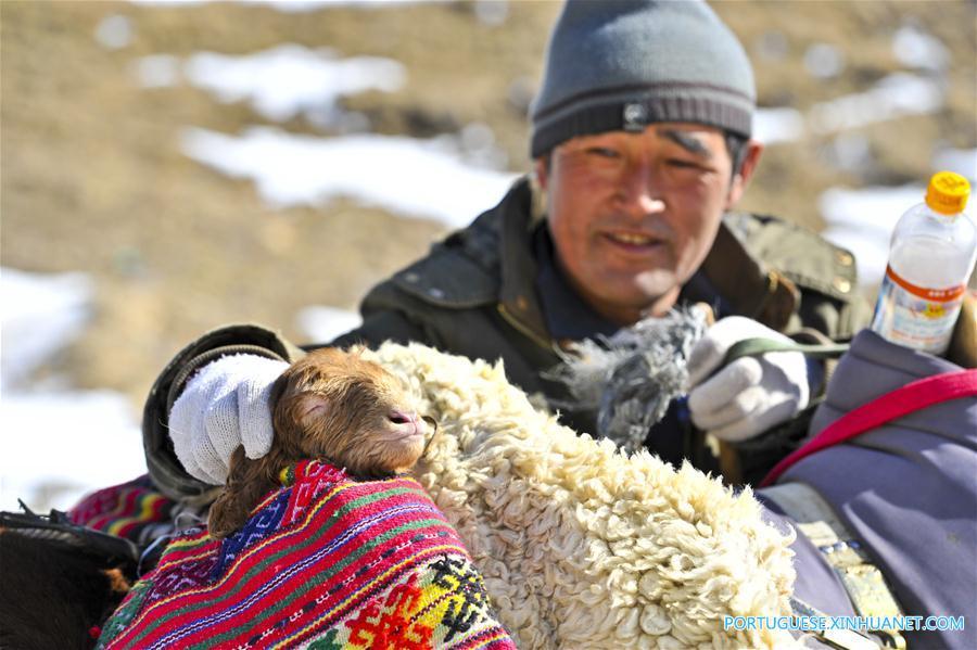 (4)CHINA-XINJIANG-INDUSTRIA-GANADERIA