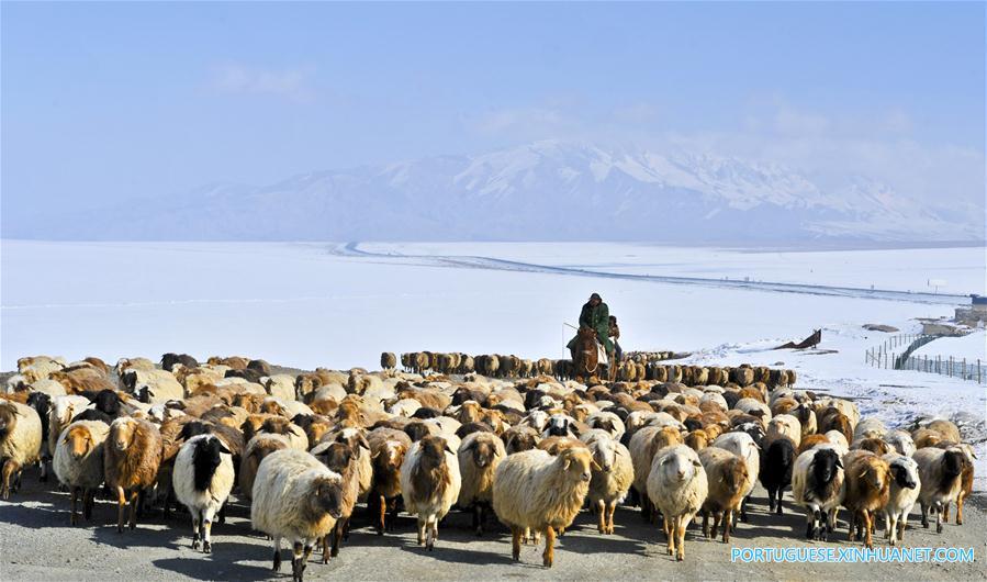 (3)CHINA-XINJIANG-INDUSTRIA-GANADERIA