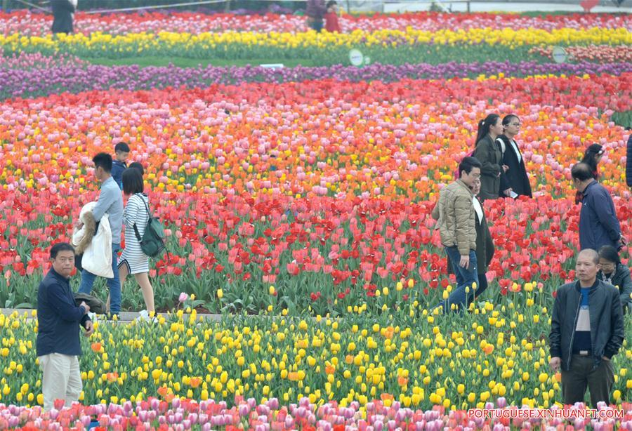 CHINA-HUNAN-CHANGSHA-TULIP BLOSSOMS (CN)
