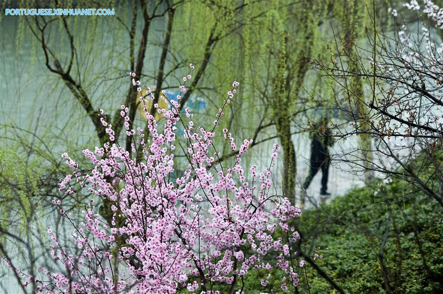 CHINA-HEFEI-PLUM BLOSSOMS (CN)