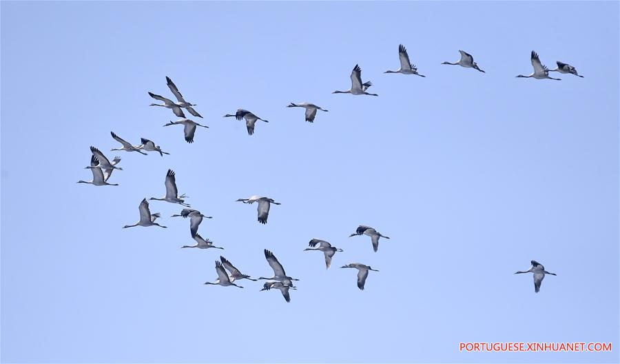 CHINA-BEIJING-MIGRATORY BIRDS (CN)