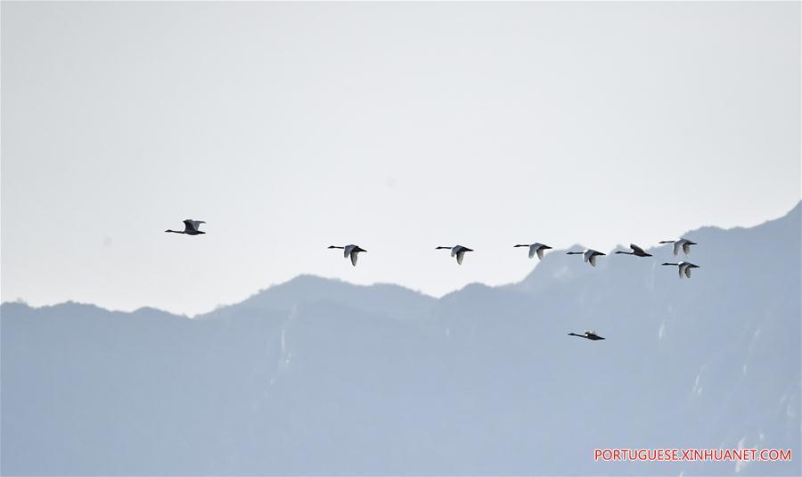 CHINA-BEIJING-MIGRATORY BIRDS (CN)