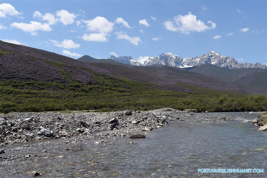 CHINA-GANSU-TIANZHU-QILIAN MOUNTAINS-SUMMER (CN)
