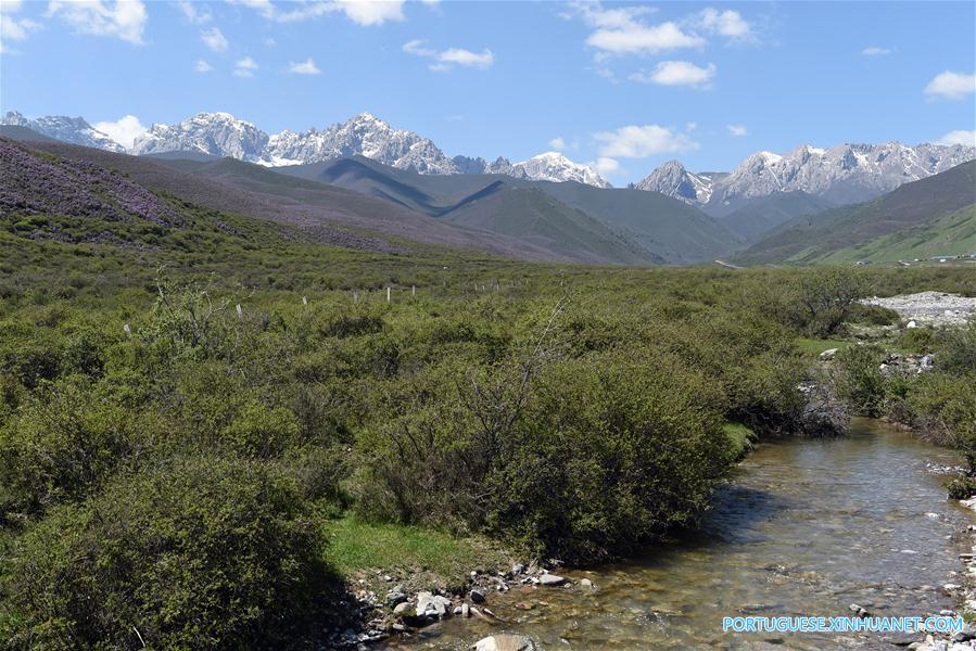 CHINA-GANSU-TIANZHU-QILIAN MOUNTAINS-SUMMER (CN)