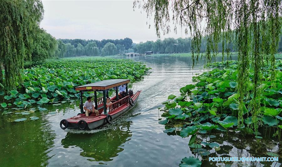 CHINA-BEIJING-YUANMINGYUAN-LOTUS (CN)