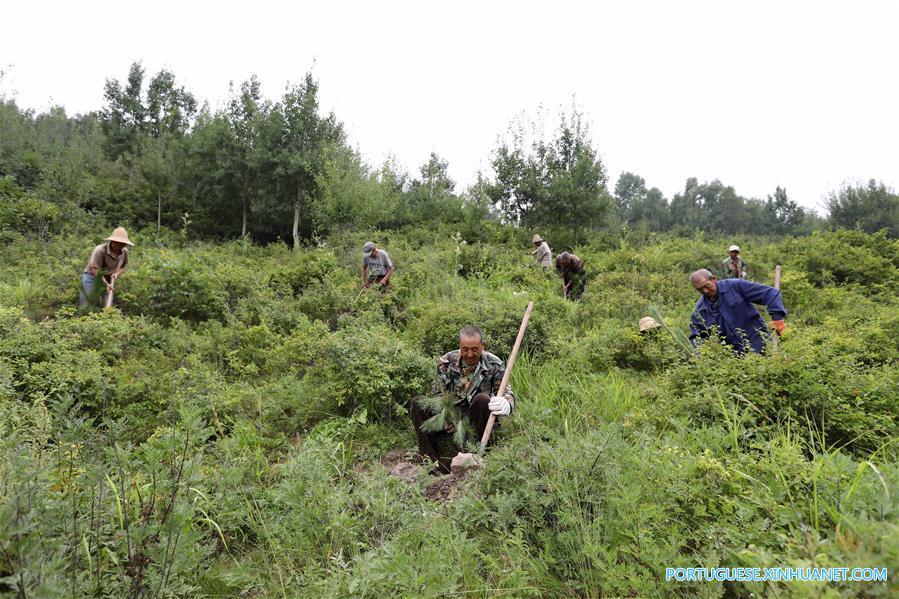 CHINA-HEBEI-ZHANGJIAKOU-ECOLOGICAL CONSTRUCTION (CN)