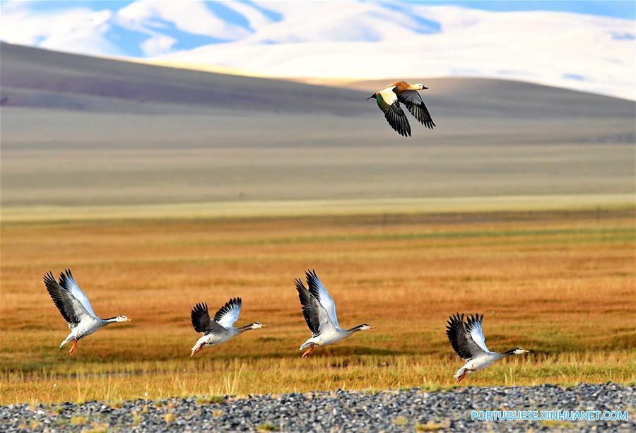 CHINA-TIBET-CHANGTANG RESERVE-WILDLIFE (CN)