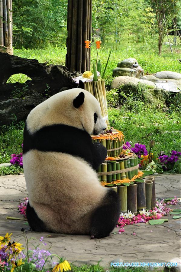CHINA-SICHUAN-GIANT PANDA-BIRTHDAY (CN)