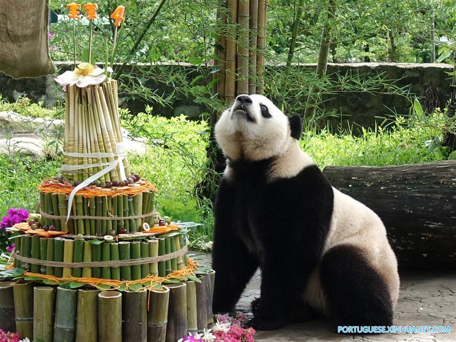 #CHINA-SICHUAN-GIANT PANDA-BIRTHDAY (CN)