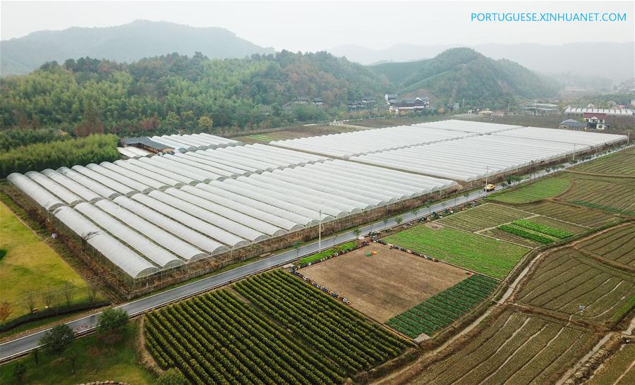 CHINA-ZHEJIANG-ANJI-LUJIA VILLAGE-GREEN DEVELOPMENT (CN)