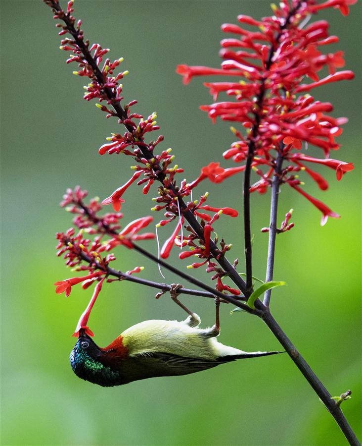CHINA-FUZHOU-FLOWERS-BIRD (CN)