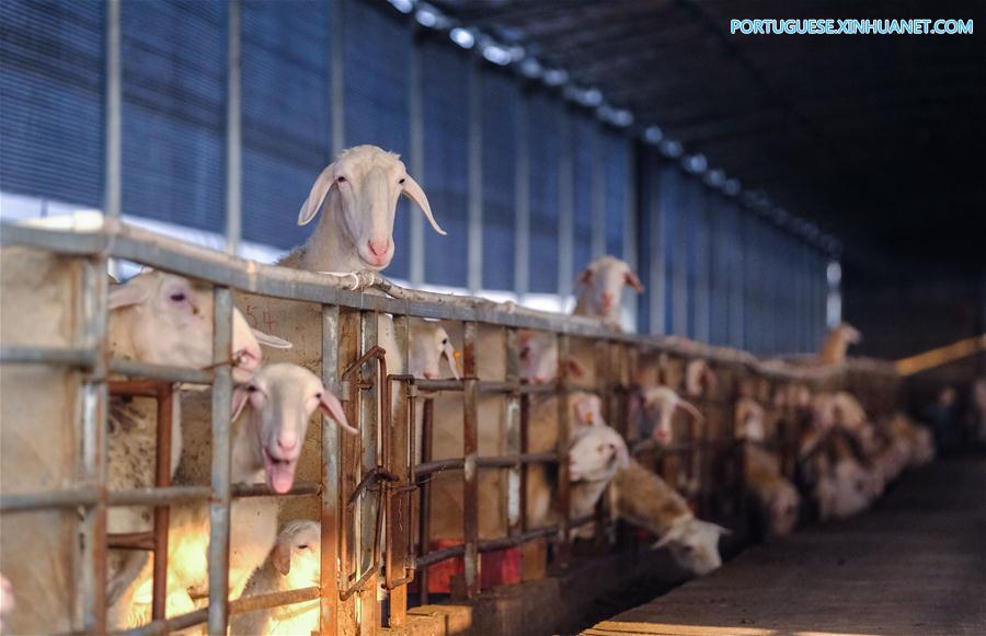 CHINA-ZHEJIANG-CHANGXING-SHEEP-BREEDING-POVERTY ALLEVIATION (CN)