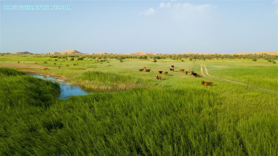 (EcoChina)CHINA-BEIJING-HORTICULTURAL EXPO-INNER MONGOLIA (CN)