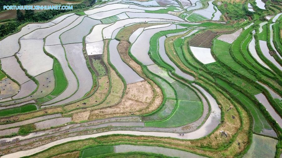 CHINA-GUIZHOU-DANZHAI-TERRACED FIELDS (CN)