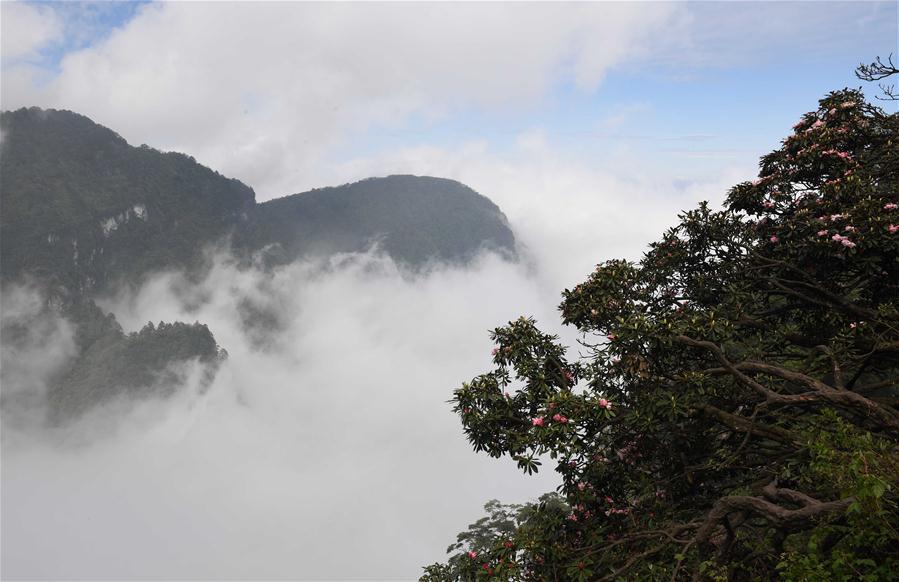 CHINA-SICHUAN-AZALEA BLOSSOM (CN)