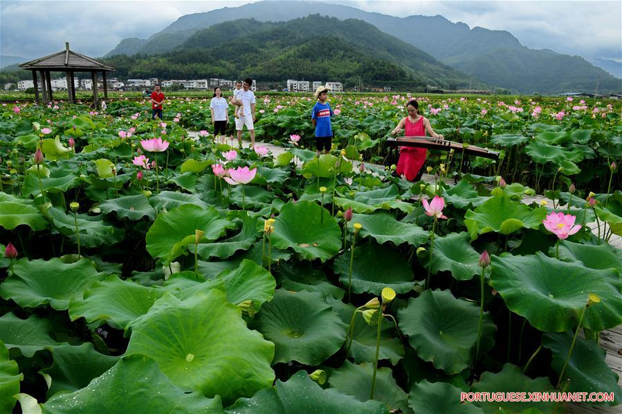 CHINA-FUJIAN-WUYISHAN-LOTUS FLOWERS (CN)