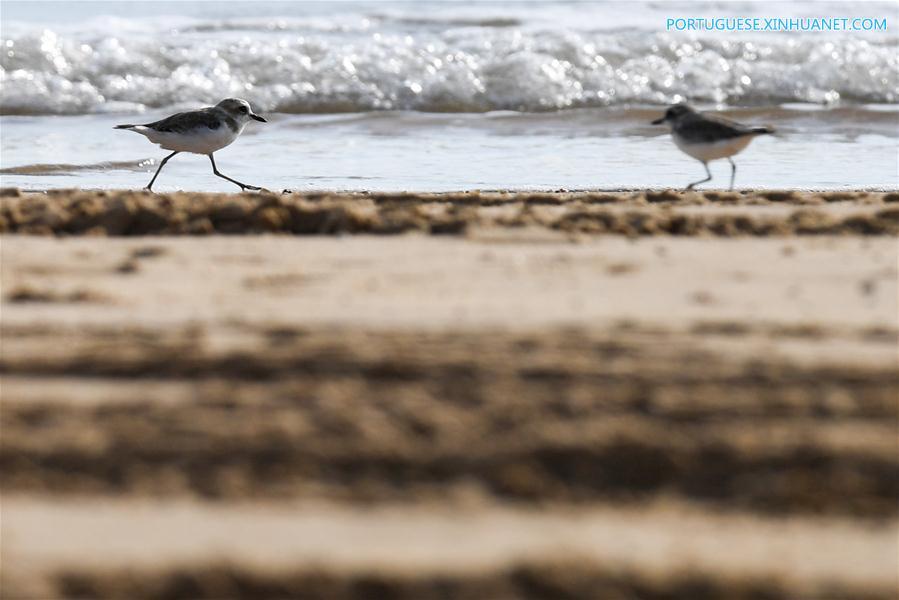 CHINA-HAINAN-HAIKOU-WETLAND PARK-BIRDS (CN)
