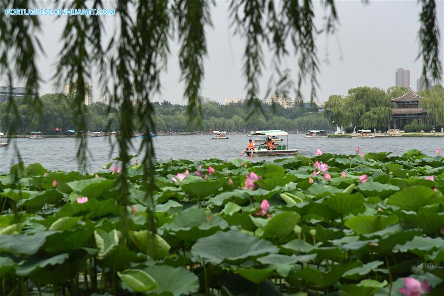 CHINA-SHANDONG-JINAN-DAMING LAKE-LOTUS (CN)