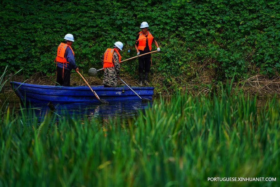 CHINA-HEBEI-XIONGAN-POLLUTED PONDS-ECOLOGICAL RESTORATION (CN)