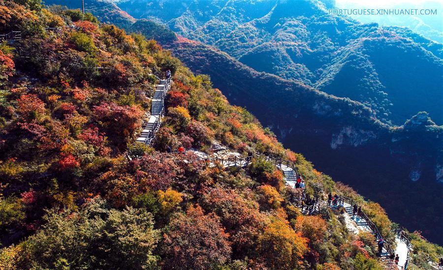 CHINA-HEBEI-SHEXIAN-RED LEAVES (CN)