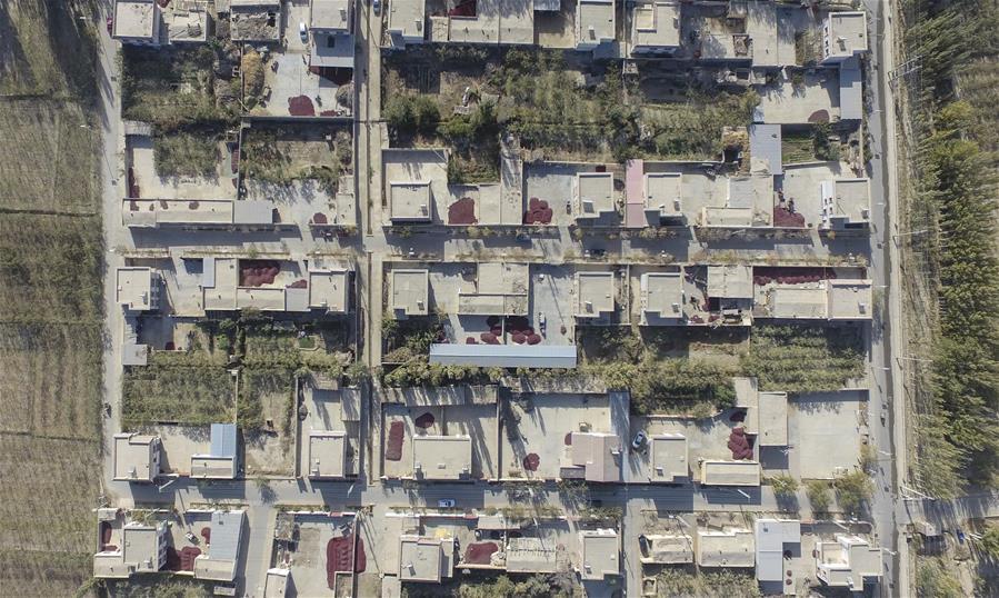 CHINA-XINJIANG-RUOQIANG-RED JUJUBE-HARVEST (CN)