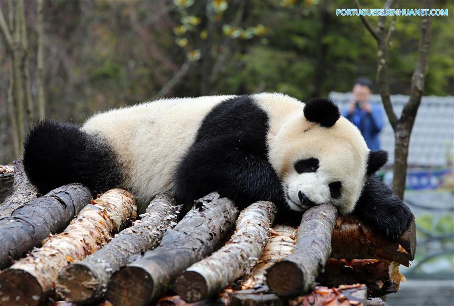CHINA-SICHUAN-JIUZHAIGOU-GIANT PANDA (CN)
