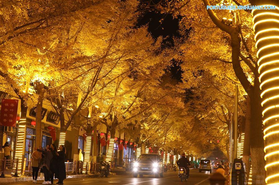 CHINA-GANSU-TIANSHUI-GINGKO TREE (CN)