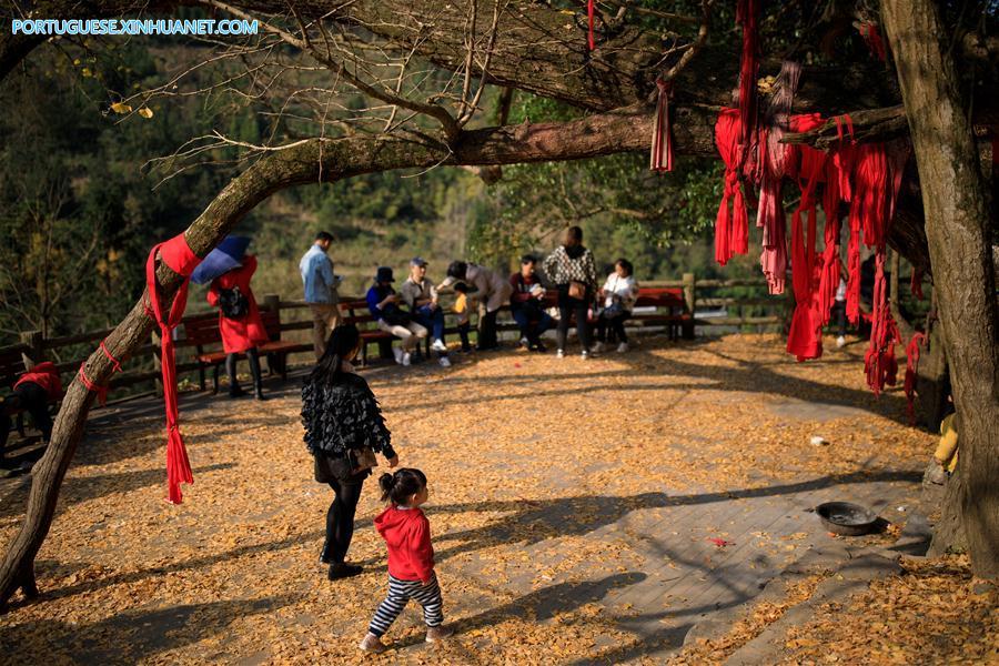 CHINA-GUIZHOU-GUIYANG-GINKGO TREE (CN)