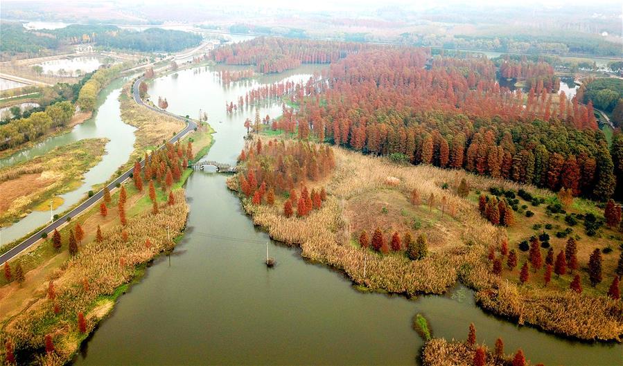 CHINA-SHANGHAI-WINTER-SCENERY (CN)