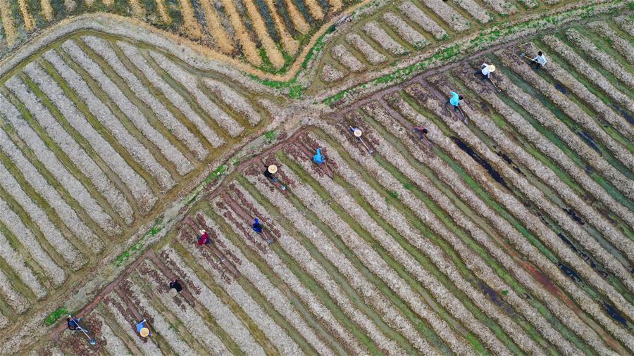 #CHINA-SPRING-FARMING (CN)