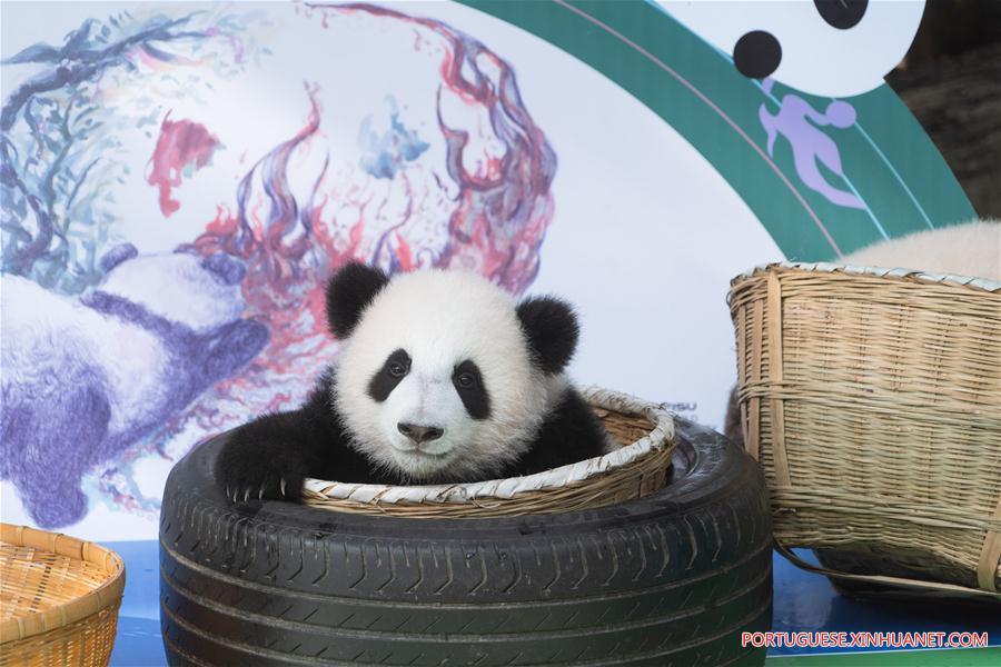 CHINA-SICHUAN-GIANT PANDA CUB-DEBUT (CN)