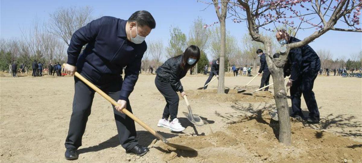 Xi planta árvores em Beijing