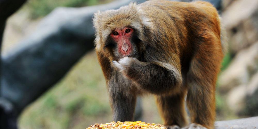 Animais comem bolo lunar em comemoração do Festival da Lua