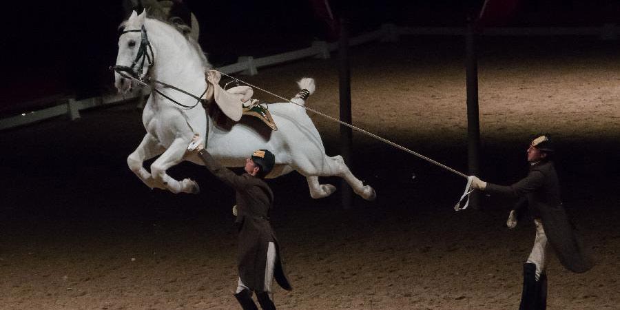 Escola Espanhola de Equitação de Viena faz espetáculo em Budapeste