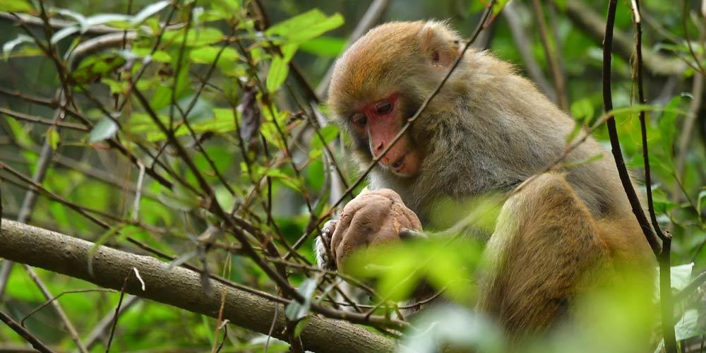 Macacos se divertem nas florestas no centro da China