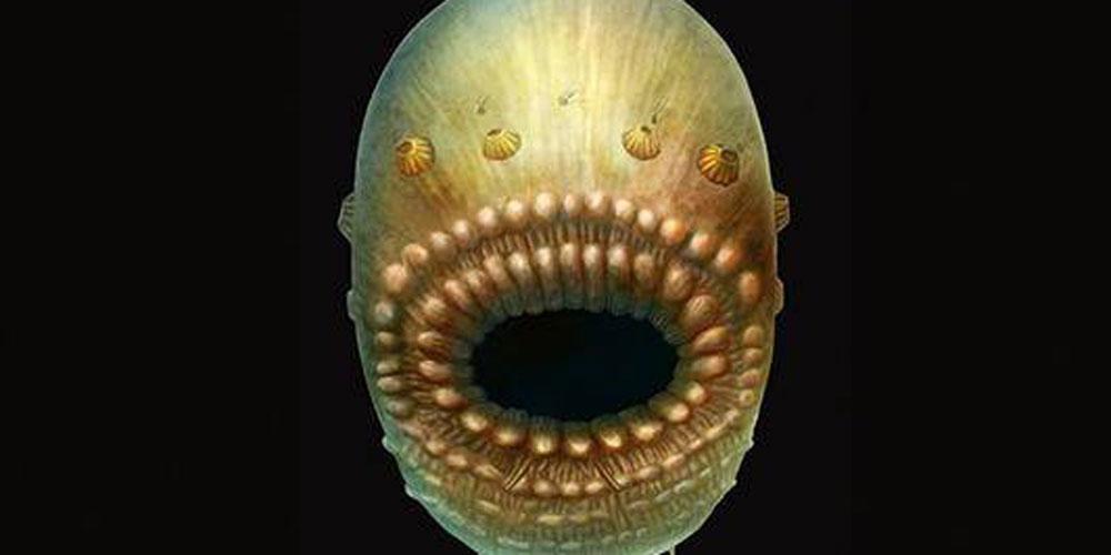 Criatura que viveu há 535 milhões de anos pode ser ancestral mais antigo dos humanos,  diz pesquisa