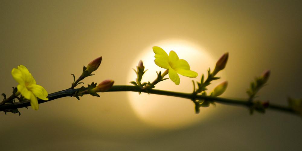 Primavera chega com o aumento da temperatura nos últimos dias