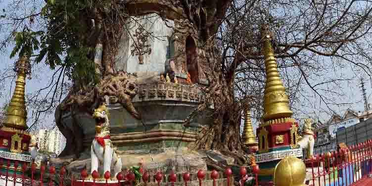 Pagode entrelaçado à árvore banyan na província de Yunnan