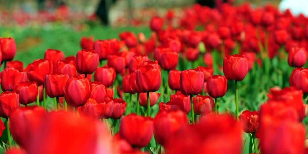 Turistas aproveitam a paisagem de flores em Nanchang, leste da China