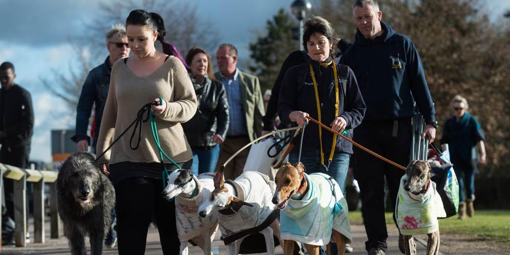 Crufts dog show é realizada em Birmingham
