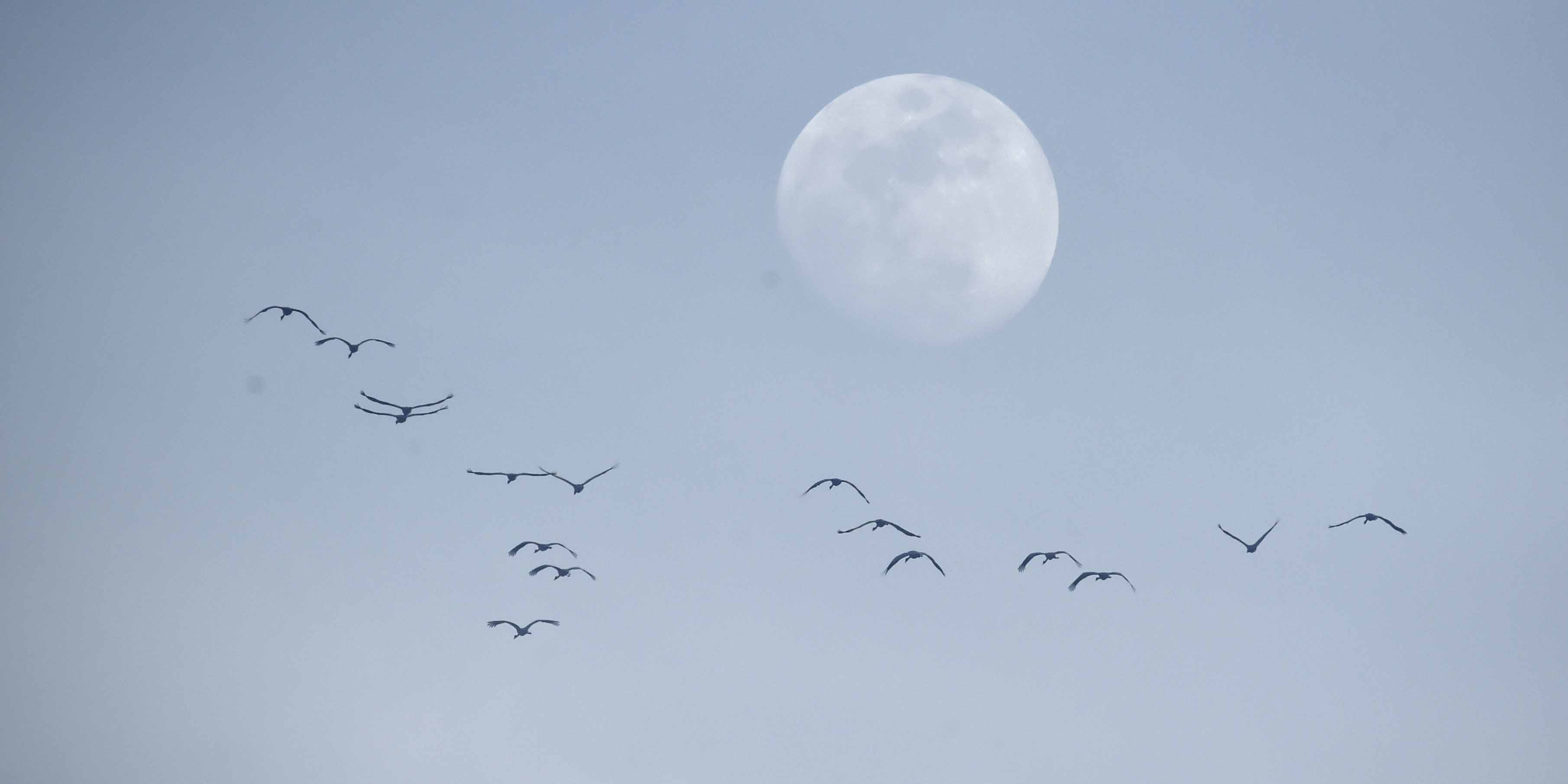 Aves migratórias voam em Beijing