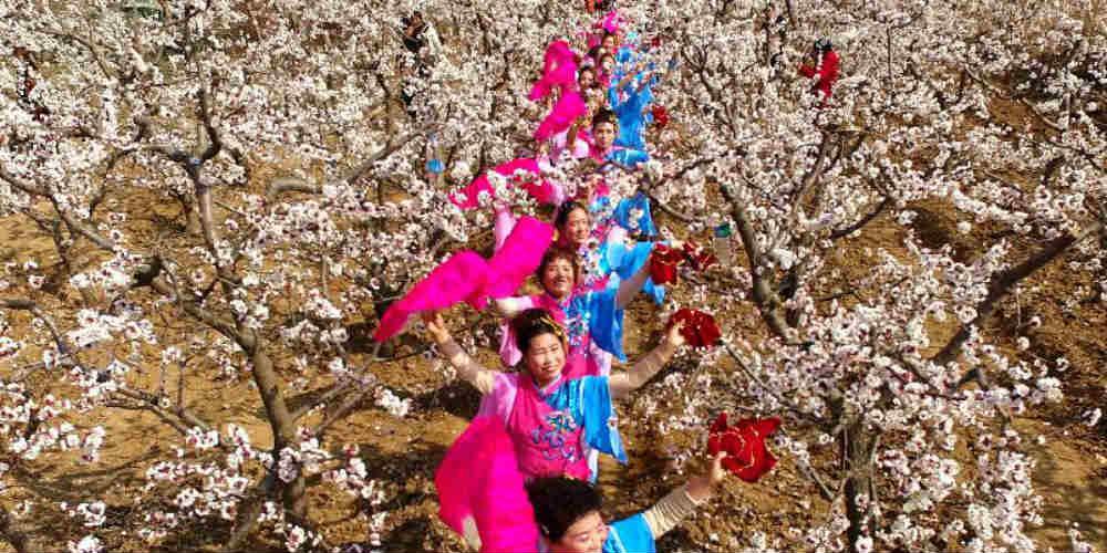 Paisagem de plantação de damasco em Shanxi