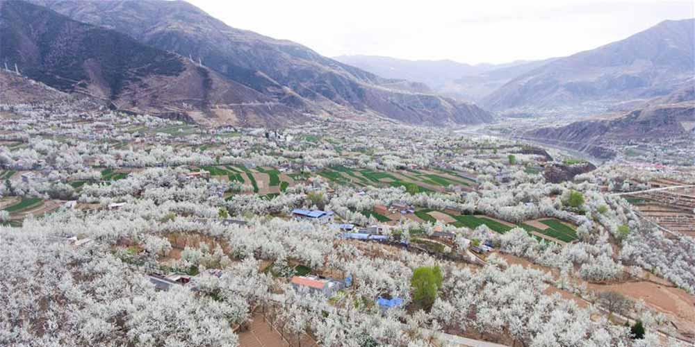 Paisagem de flores de pereira em Sichuan