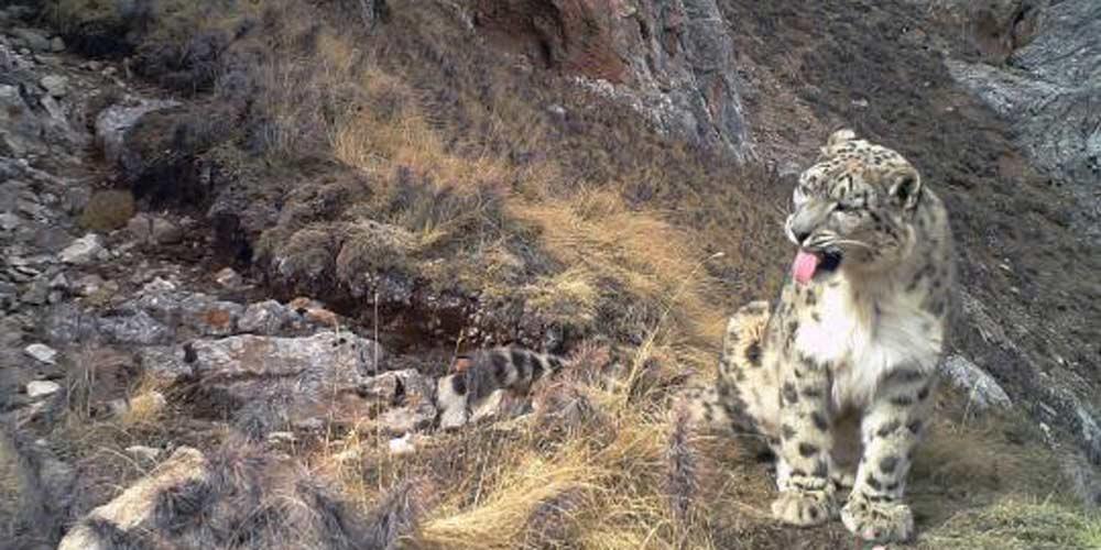 Grande variedade de animais carnívoros habitarão o próximo parque nacional da China
