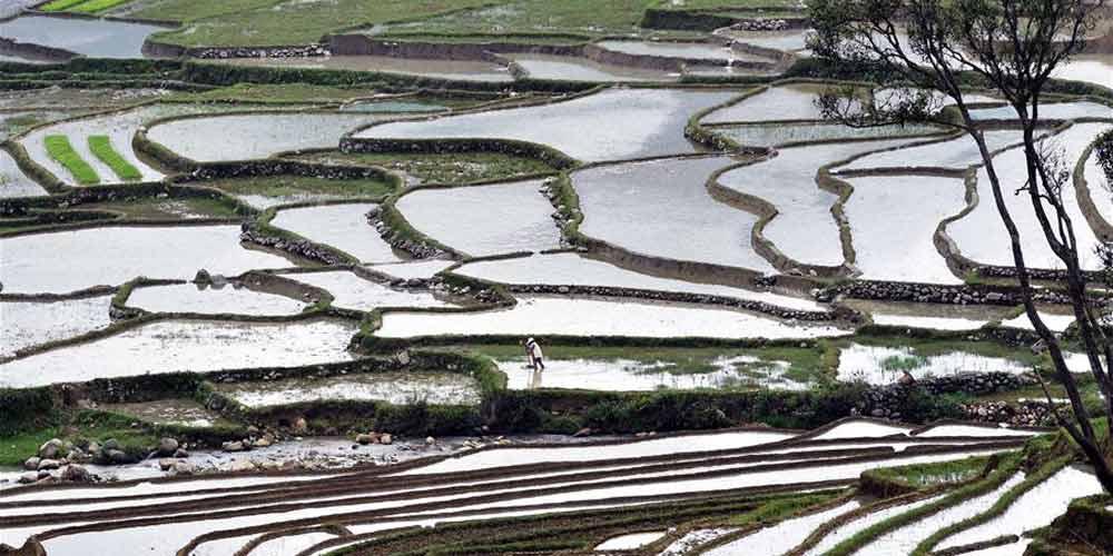 Chegada da primavera intensifica os trabalhos de plantio de arroz no sudoeste da China